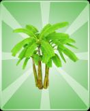 JunglePalmLarge