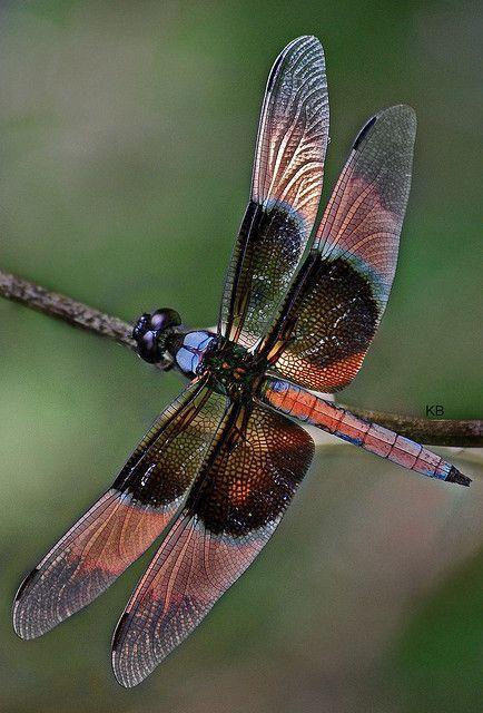 0f8f6ddf375b40e79679fd6b9d24982a--dragon-flies-dragon-fly-wings