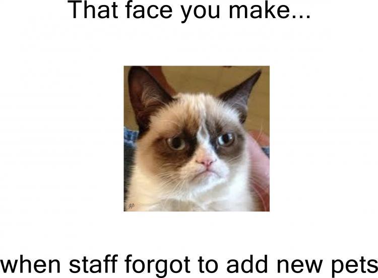 Grumpy Cat MEME pets