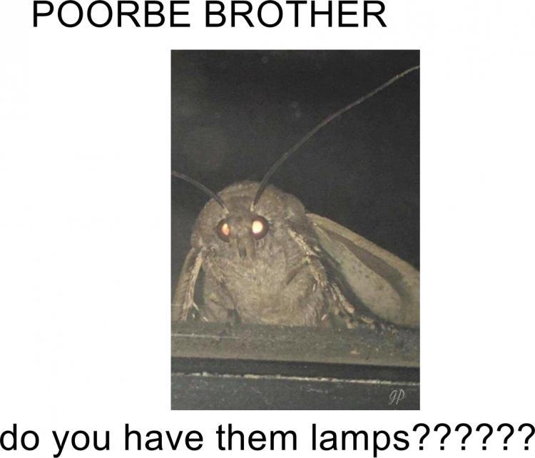 moth for lamps meme