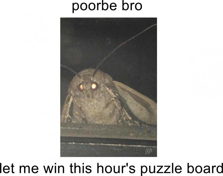 moth for lamps meme 2