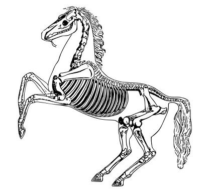 skeletonhorse1