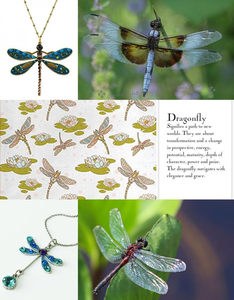 Dragon Fly Collage