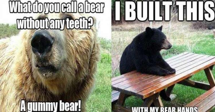 funny-bear-puns-u1