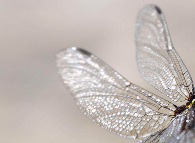 crystal dragonfly wings