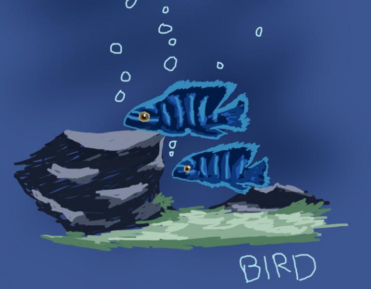 showjumpingbird_fishdrawing02 copy