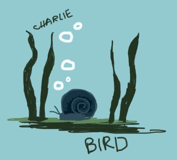 showjumpingbird_snaildrawing
