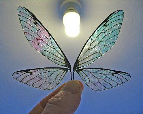 translucent dragonfly wings