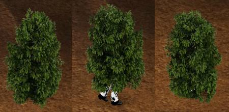 leafincognitoMagic